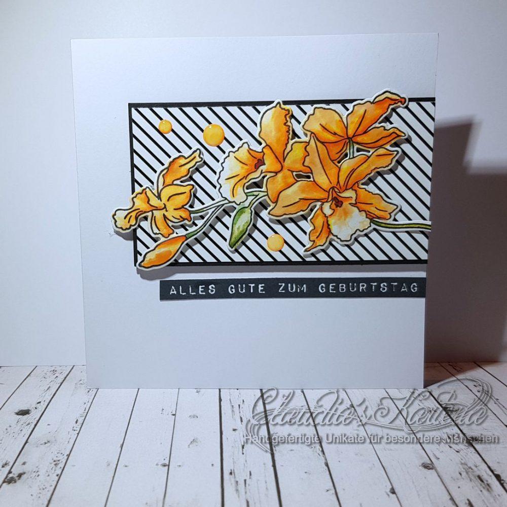 Cattleya zeitlos auf schwarz-weiss   Geburtstagskarte